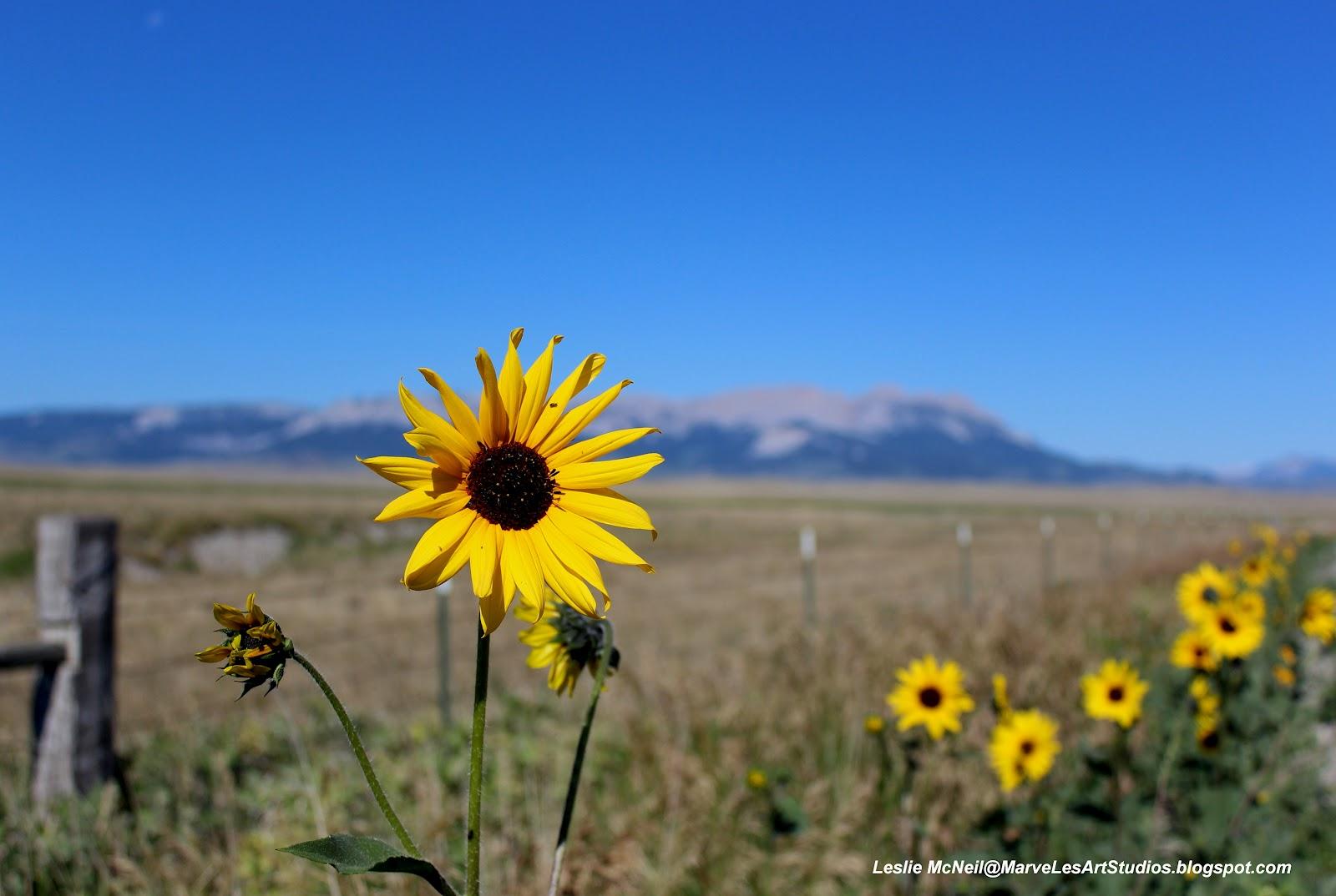 Rocky Mountain Front ~ Montana - Marveles Art Studios